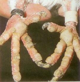 изгнание паразитов из организма